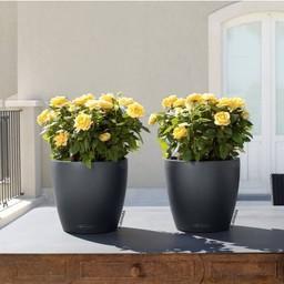 Lechuza Classico couleur Flowerpot
