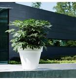Elho Elho Pure Round - Pot de fleurs rond blanc diam 30cm H26cm. -15% de réduction en ligne!