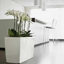 Cararo Flowerpot