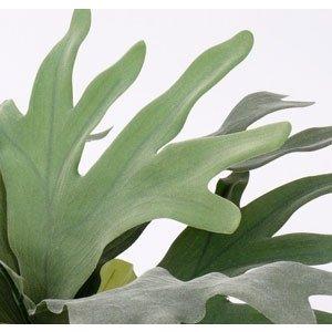 Hertshoorn Plant 70cm