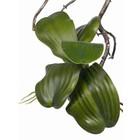 Orchidee Blad (6 bladen) 36cm