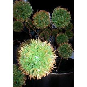 Chestnut Tak 81cm Groen