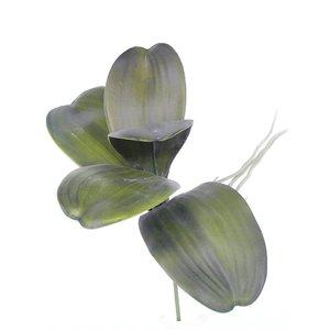 Orchidee Blad (5 bladen + wortel) 36cm