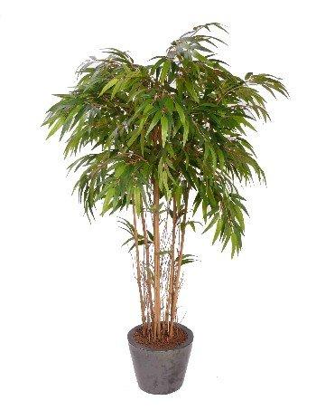 Bamboe plant 180cm groen for Bamboe plant