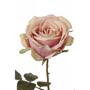 Roos Milan Tak 64cm Roze