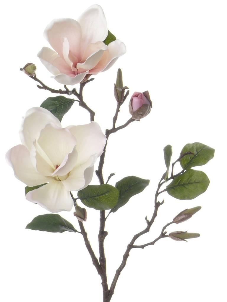 Home » Magnolia Tak 72cm Wit Roze