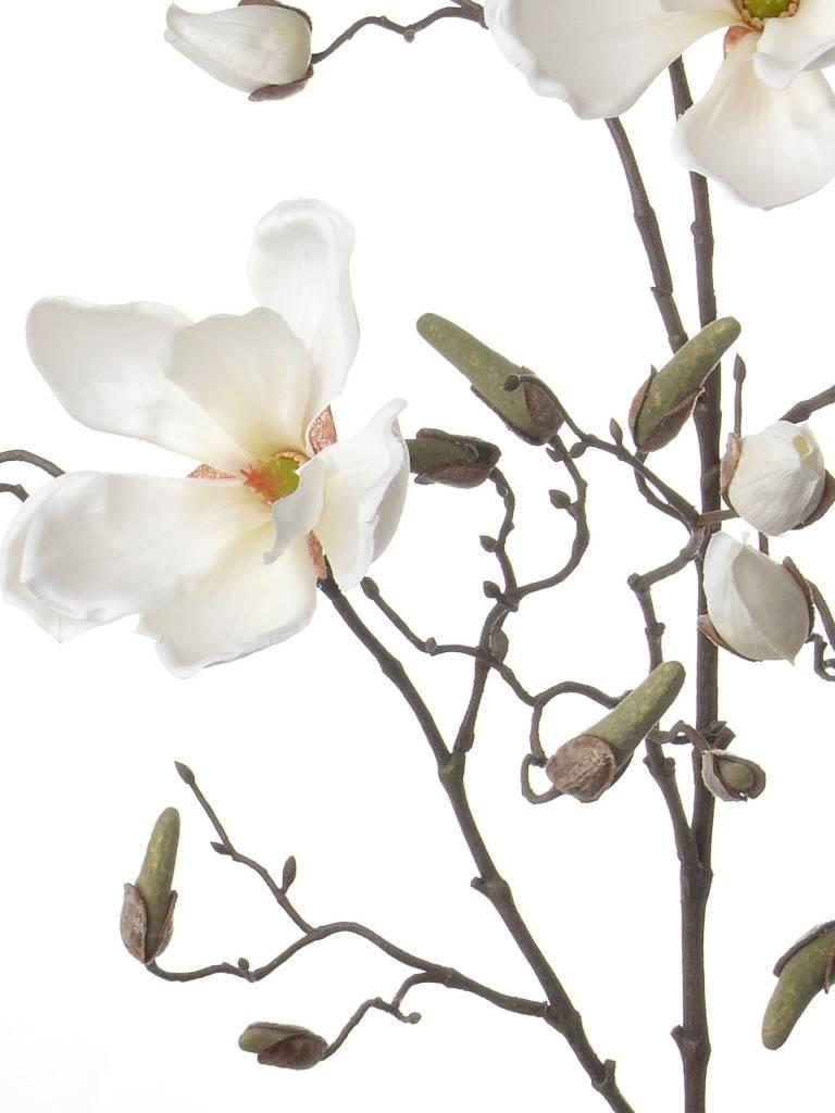 Magnolia Tak 107cm Creme Wit - Bloempotshop.nl