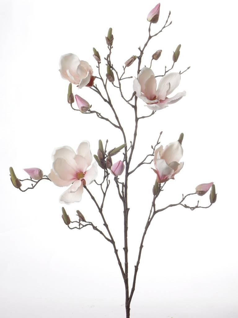 Magnolia Tak 107cm Wit Roze - Bloempotshop.nl