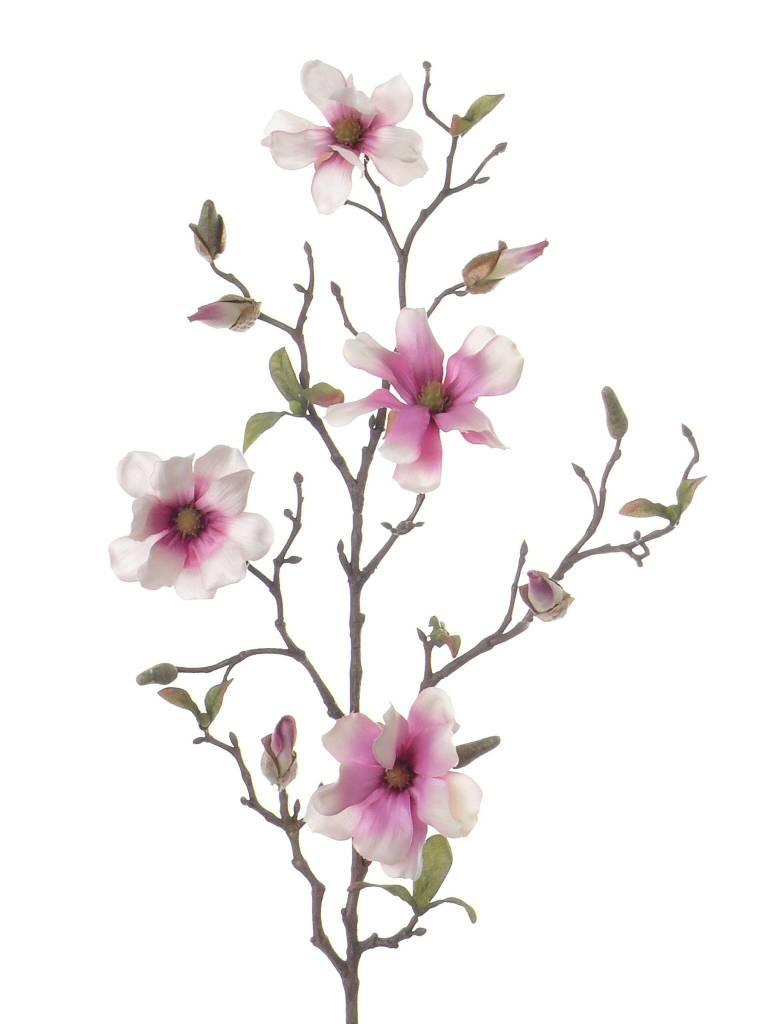 Magnolia Tak 78cm Wit Roze - Bloempotshop.nl