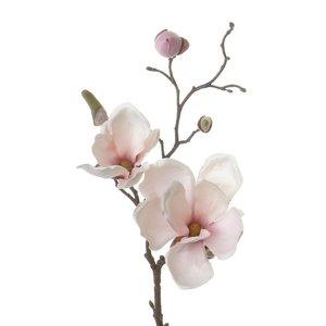 Magnolia Tak 48cm Wit Roze
