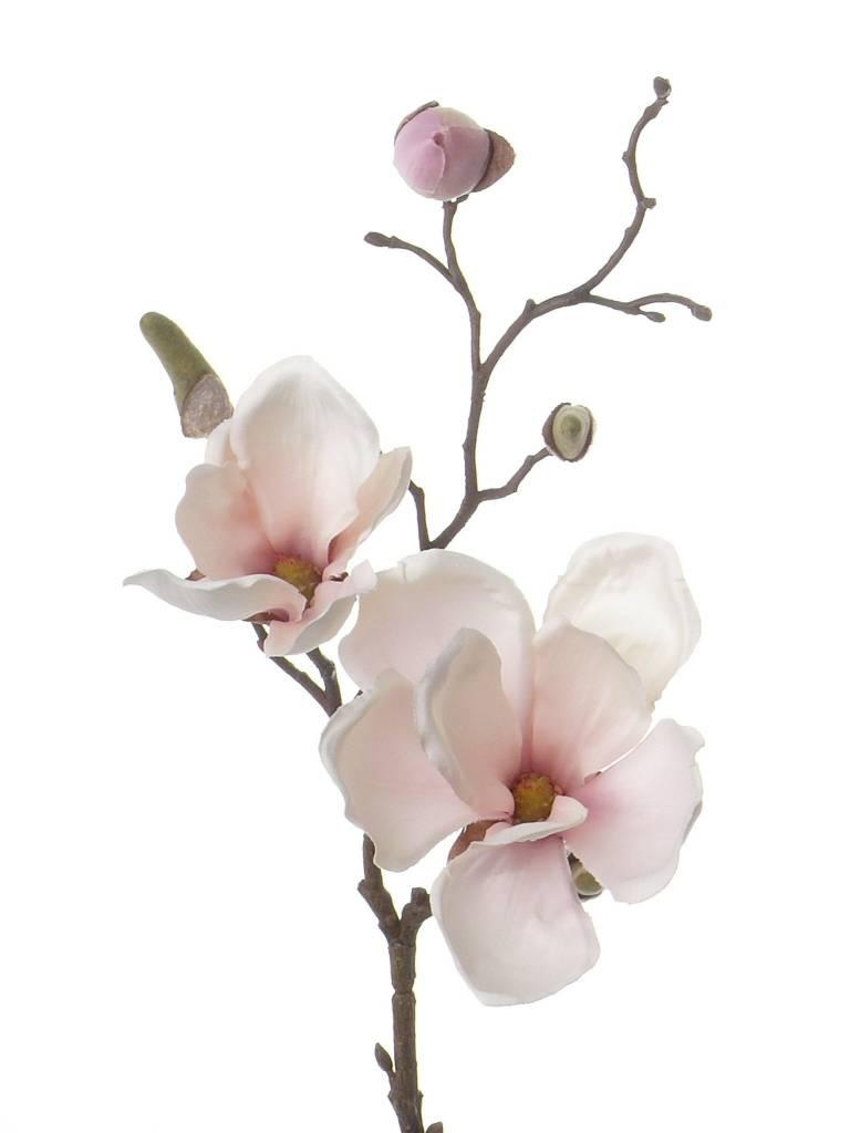 Magnolia Tak 48cm Wit Roze - Bloempotshop.nl