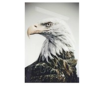 HK living plexi obligation 'eagle'