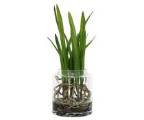 HK living forankret Cymbidium orkideer vase