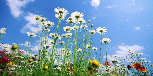 Maakt u al plannen voor uw tuin voor komend voorjaar?