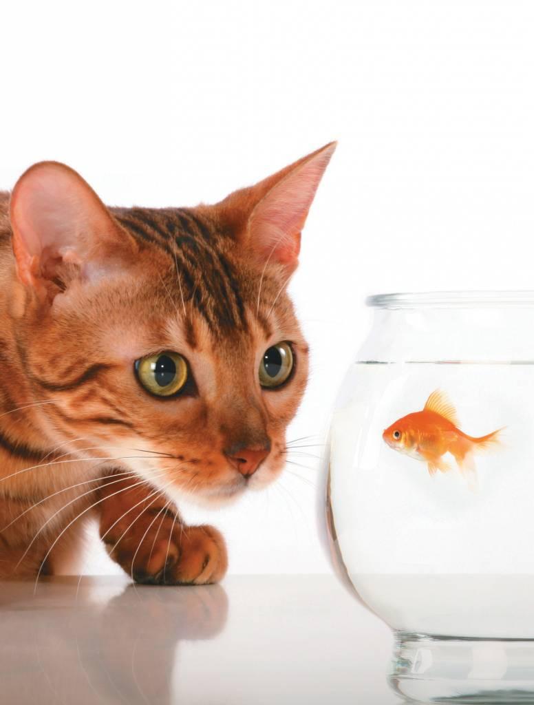 cat litter systems reviews