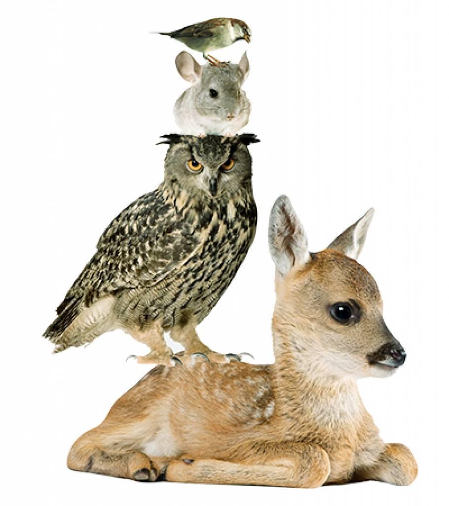 De Feestdagen | Set dieren, deer, chinchilla, mus en uilMus / Sperling: 15 x 7 cmChinchilla: 10 x 10 cmUil / Eule: 27 x 29 cmHert / Hirsch: 42 x 35 cm