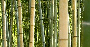 Wat is bamboe beddengoed?