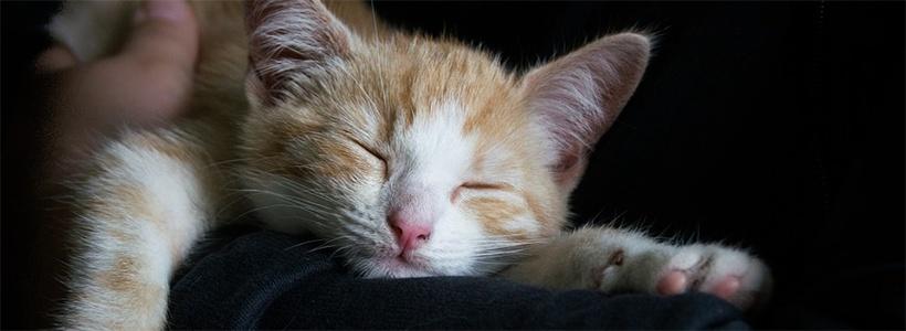 Slapen - dit is de slechtste slaappositie