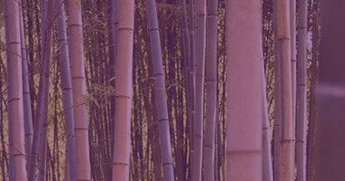 Wat is een bamboe kussen en beddengoed?