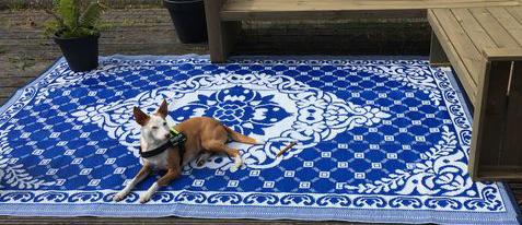 hond loungen op plastic buitenvloerkleed