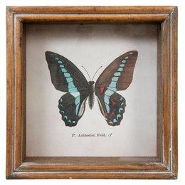 Clayre & Eef 63730 Schilderij Vlinder