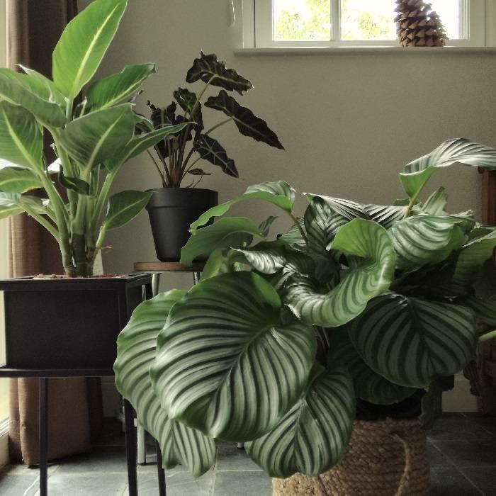 Retro metalen plantenstandaard (hoogte 34 cm) voor een potmaat tot Ø 15 cm