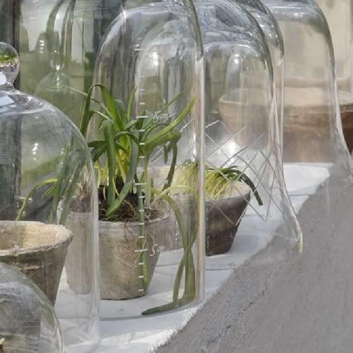 Glazen kweekklok met een groei-maataanduiding
