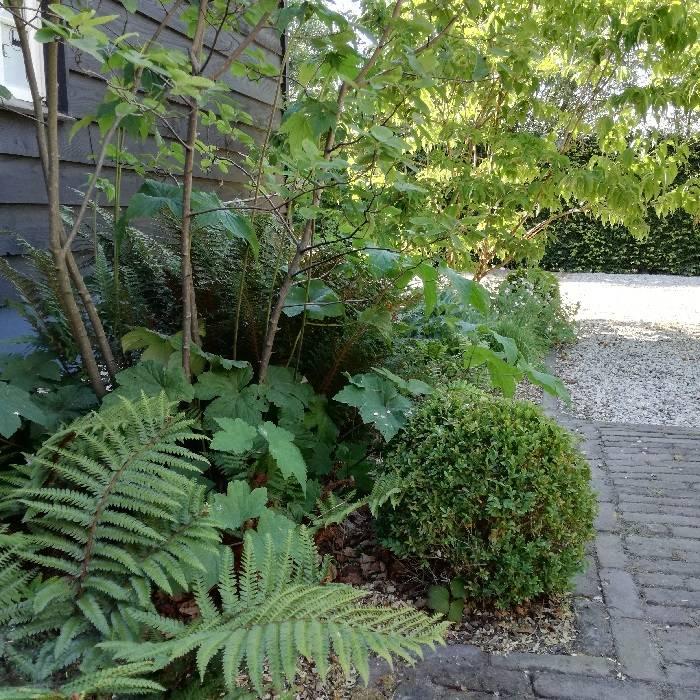 schaduwborder • groenblijvende vaste planten
