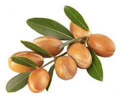 Argan oil beens