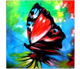Vlinder Droom
