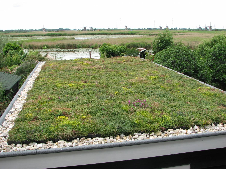 Kant en klaar groen Sedum dak, Hoe werkt het?