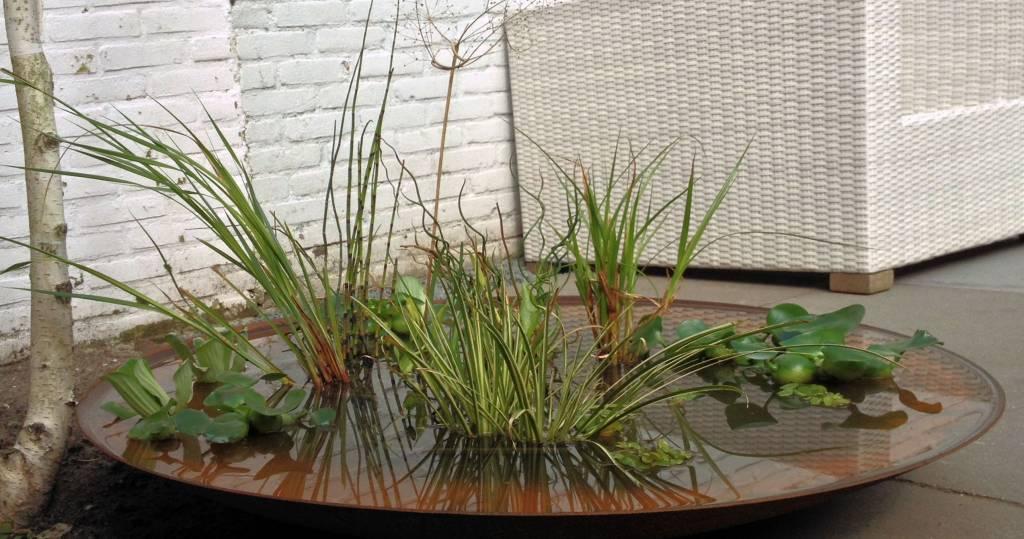 Waterschaal cortenstaal 100 cm compleetgroen for Huis in tuin voor ouders