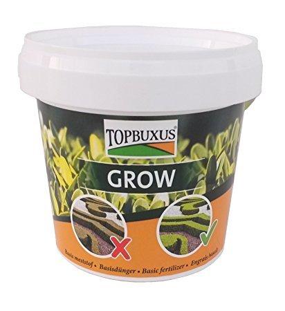 Top Buxus Grow