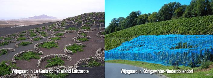 Bescherming van wijngaarden