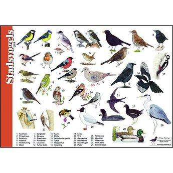 Tringa paintings natuurkaarten Natuur zoekkaarten Stadsvogels