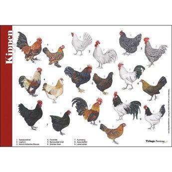 Tringa paintings Natuur zoekkaart Kippen