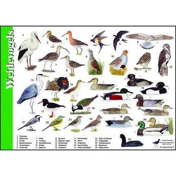 Tringa paintings Natuur zoekkaart Weidevogels