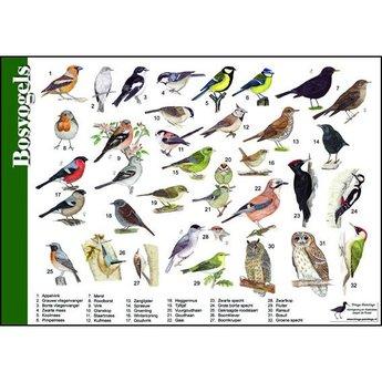 Tringa paintings Natuur zoekkaart Bosvogels