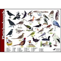 Tringa paintings Herkenningskaarten Plattelandsvogels