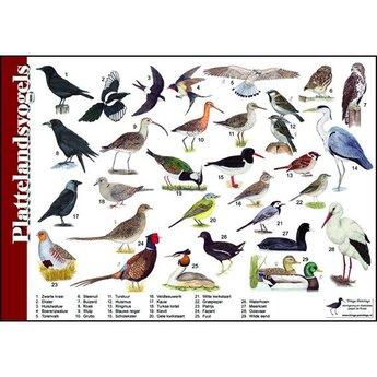 Tringa paintings Natuur zoekkaart Plattelandsvogels