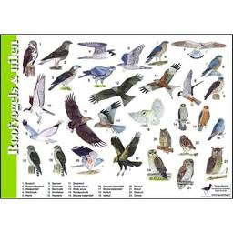 Tringa paintings Herkenningskaarten Roofvogels en Uilen