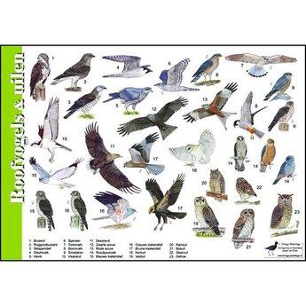 Tringa paintings Natuur zoekkaarten Roofvogels en Uilen