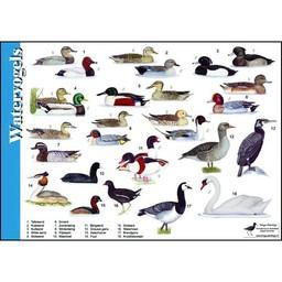 Tringa paintings natuurkaarten Herkenningskaarten Watervogels