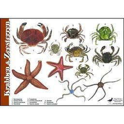 Tringa paintings Herkenningskaarten Krabben en Zeesterren