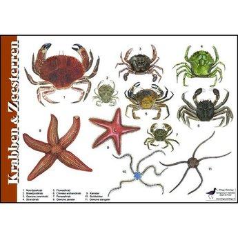 Tringa paintings Natuur zoekkaarten Krabben en Zeesterren