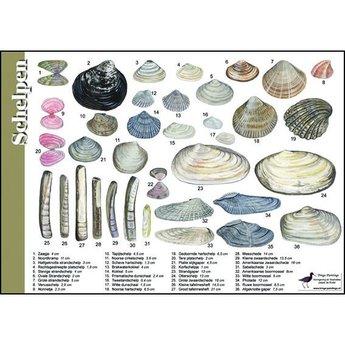 Tringa paintings natuurkaarten Natuur zoekkaarten Schelpen