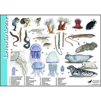 Tringa paintings natuurkaarten Natuur zoekkaarten Leven in de zee