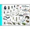 Tringa paintings natuurkaarten Herkenningskaarten Waterdiertjes