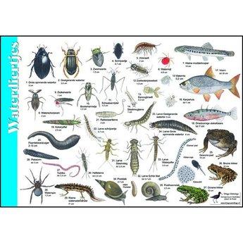 Tringa paintings natuurkaarten Natuur zoekkaarten Waterdiertjes