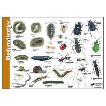 Tringa paintings natuurkaarten Natuur zoekkaarten Bodemdiertjes